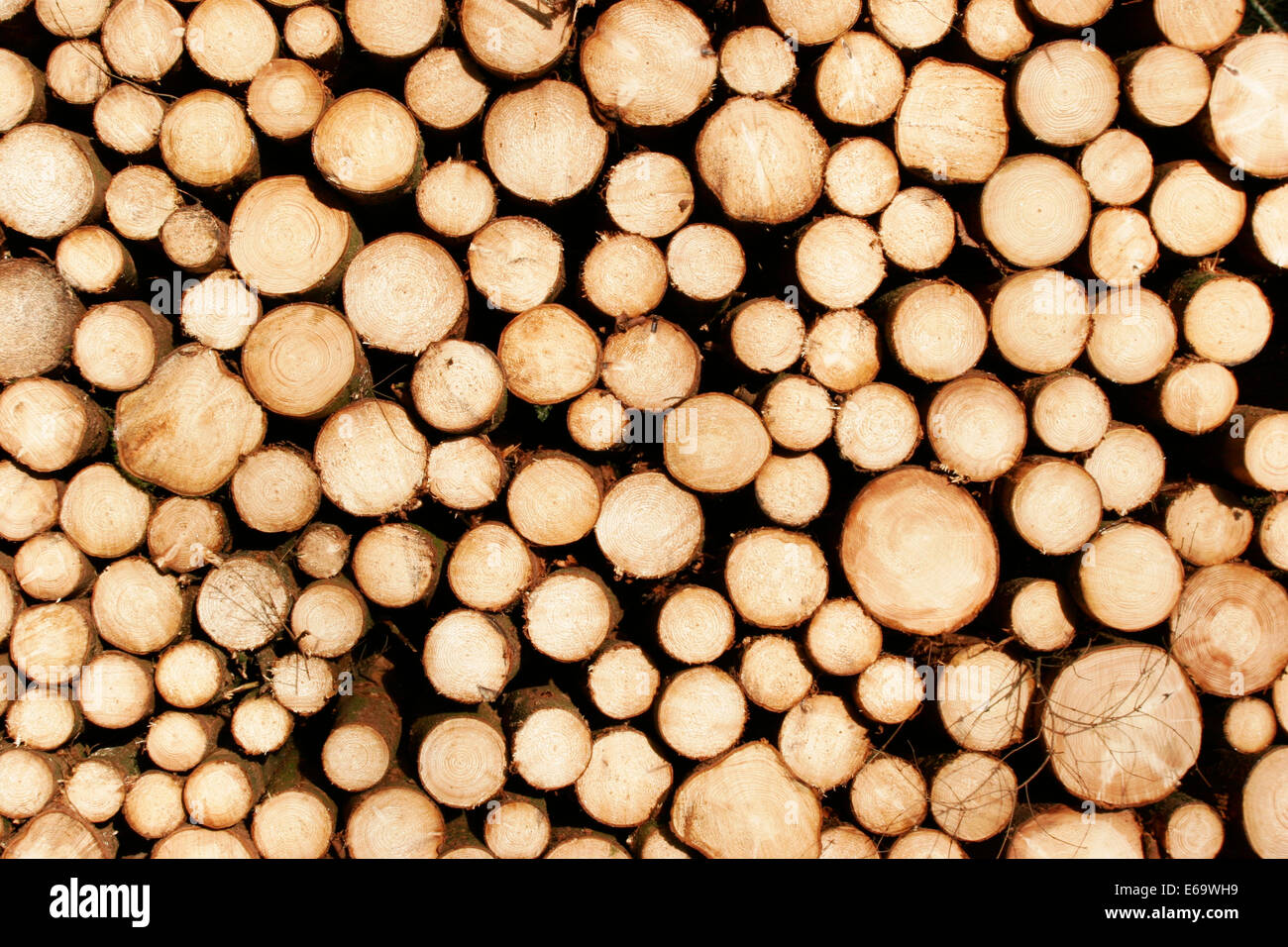 wood pile,forestry,firewood - Stock Image