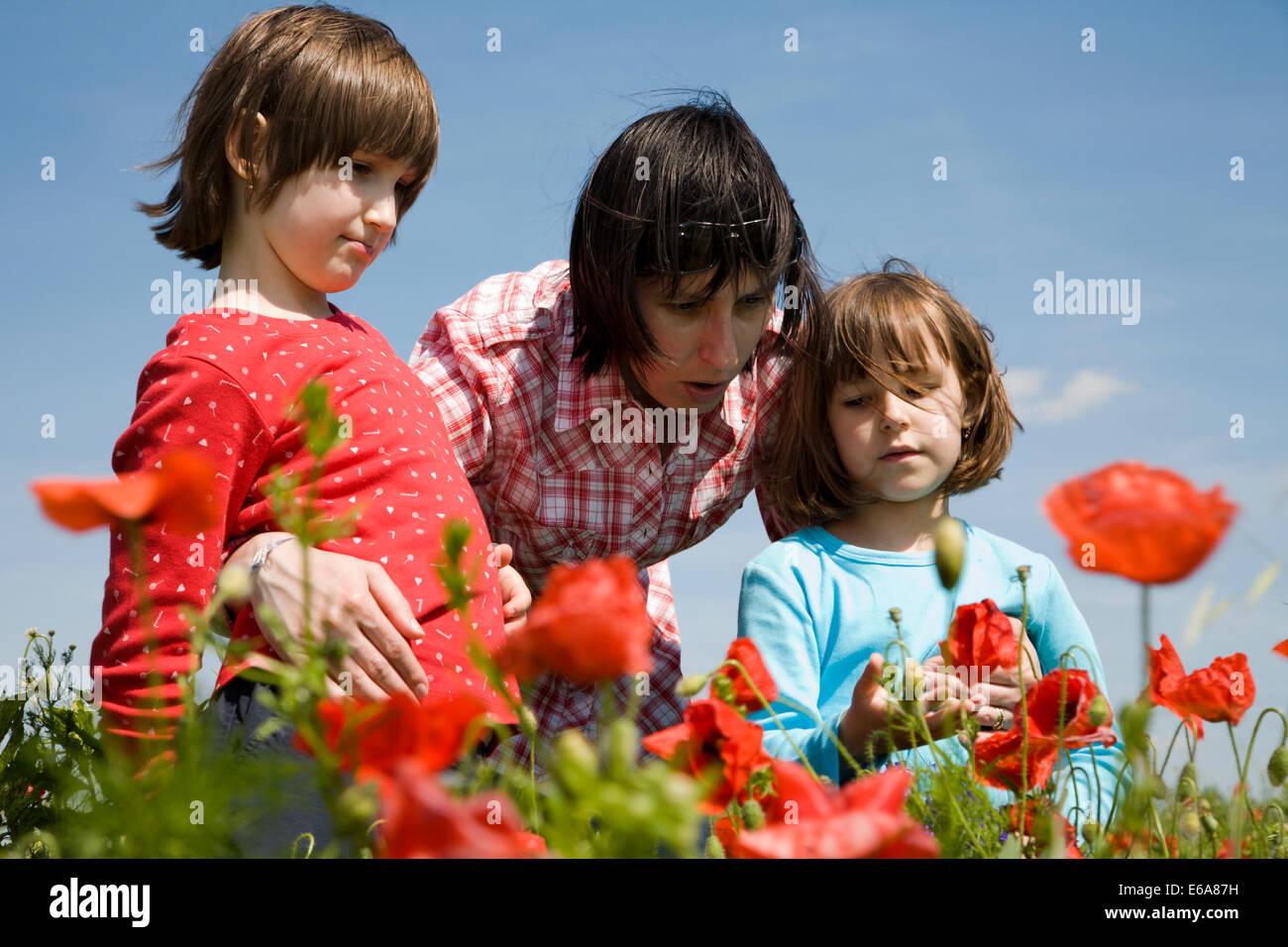 flower meadow ,family,poppy flower - Stock Image