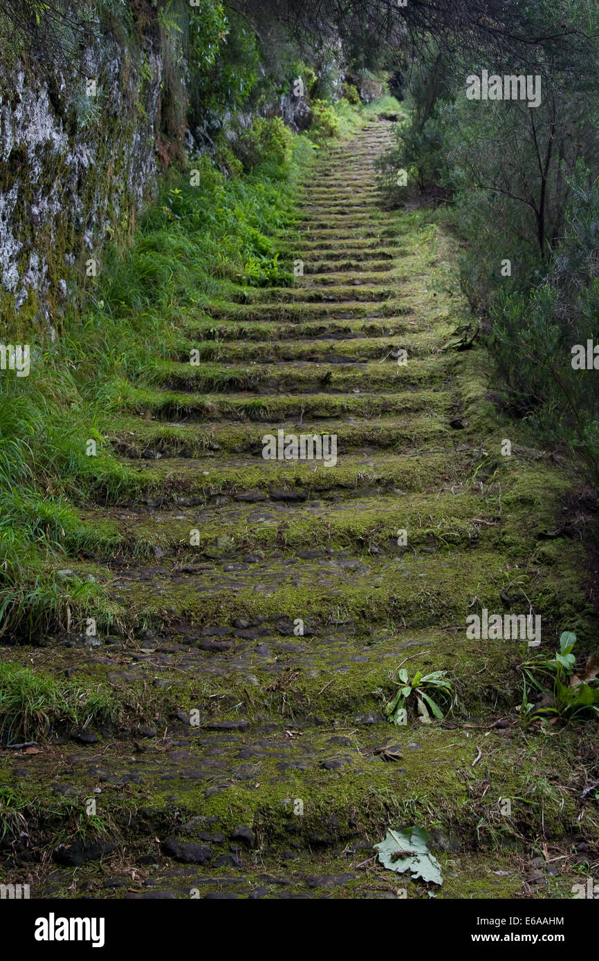 footpath,staircase,mysterious,dirt road - Stock Image