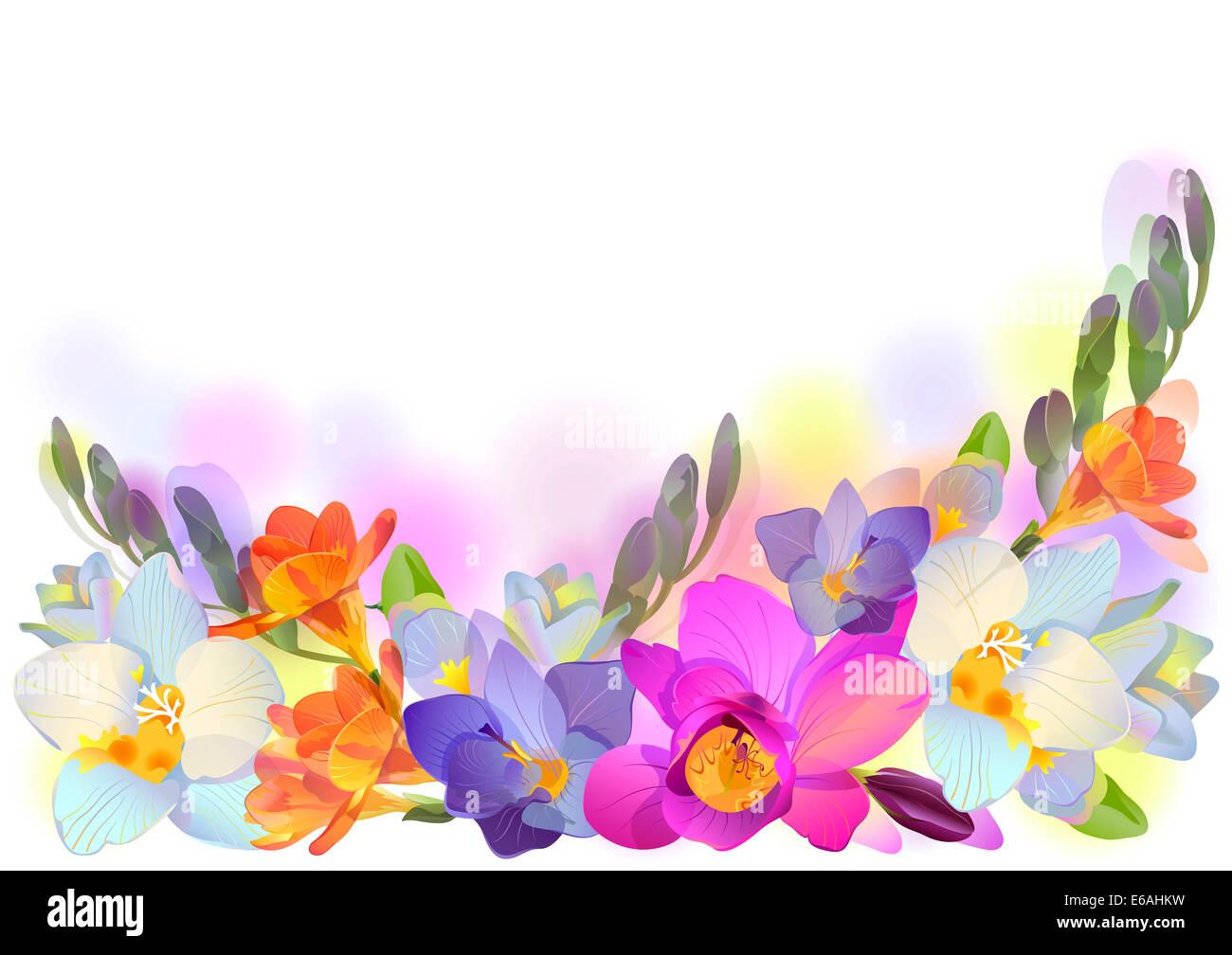 Freesia flower white background stock photos freesia flower white greeting background with pictorial freesia flowers in horizontal format stock image mightylinksfo