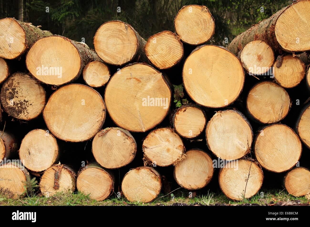 tree trunk,firewood - Stock Image
