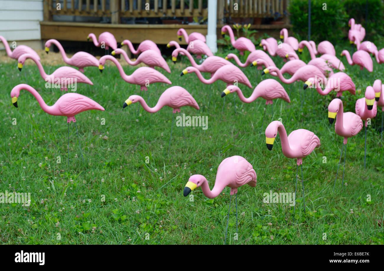 Pink Flamingo Lawn Stock Photos & Pink Flamingo Lawn Stock Images ...