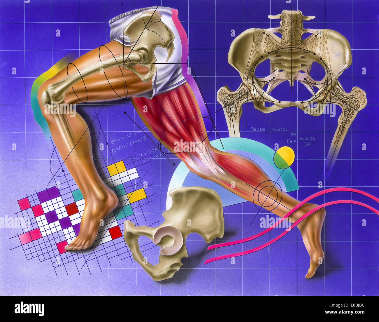 Schematic showing hip and leg motion. - Stock Image