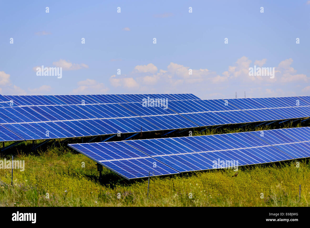 ground solar panels in a field under a blue sky - Stock Image