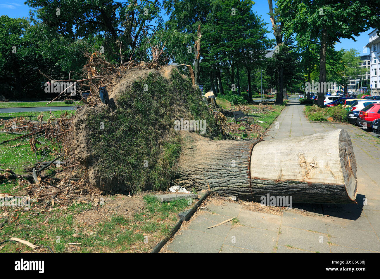 storm damages by depression 'Ela' on June 9, 2014 an June 10, 2014, disrooted tree on a pavement at Haumann - Stock Image