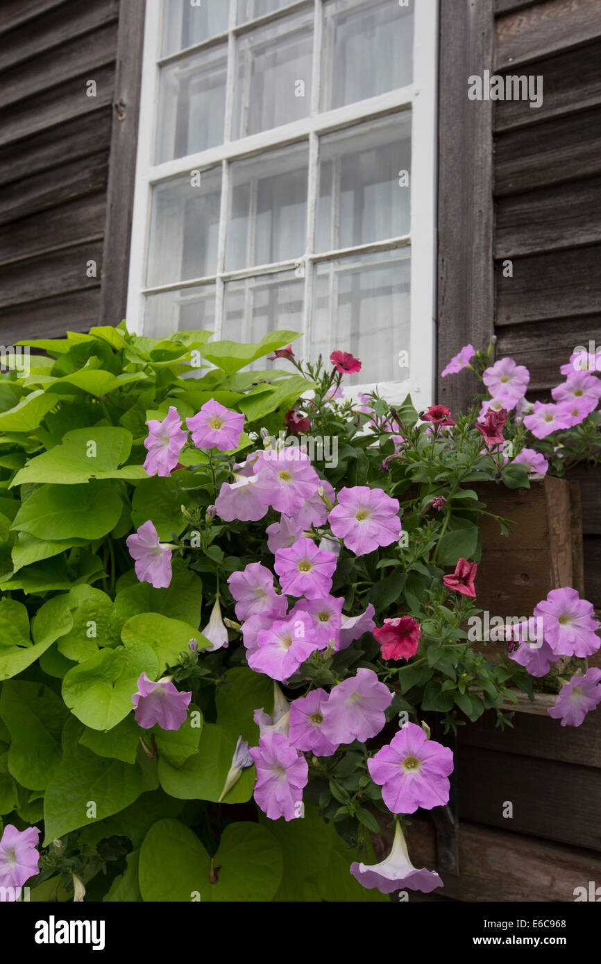 Amana, Iowa - A flower box below the window of a home in the communal Amana Colonies, established by German immigrants - Stock Image