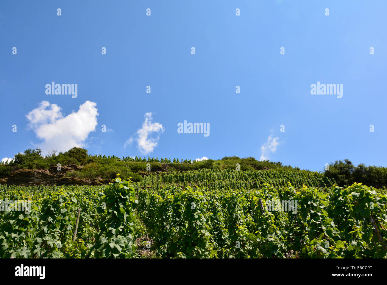 Moselle vineyards with blue sky in summer and clouds Germany Rhineland Palatinate Weinberg Weinberge Weinbergslandschaft Mosel Stock Photo