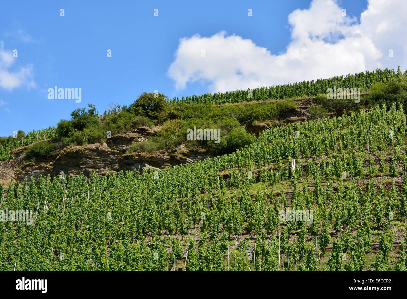 Moselle Vineyards landscape summer Germany Rhineland Palatinate with blue sky Mosel Mosellandschaft Weinberg Weinbergslandschaft Stock Photo