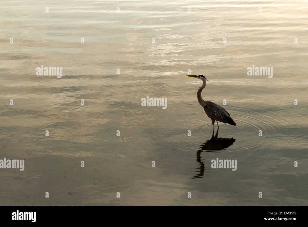 A bird looking out - Stock Image