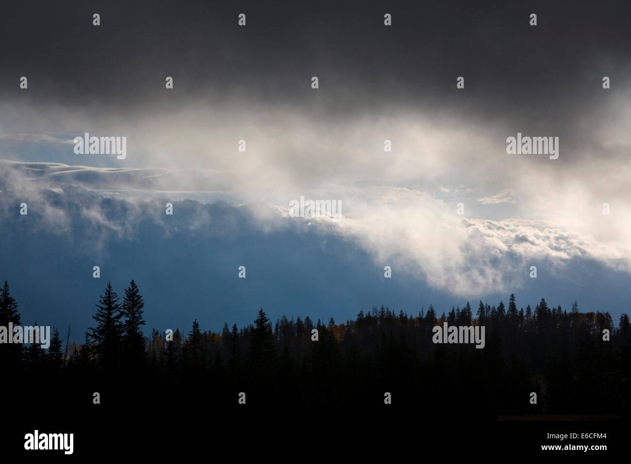 Utah. USA. Low clouds and conifer forest. Sevier Plateau. Fishlake National Forest. - Stock Image