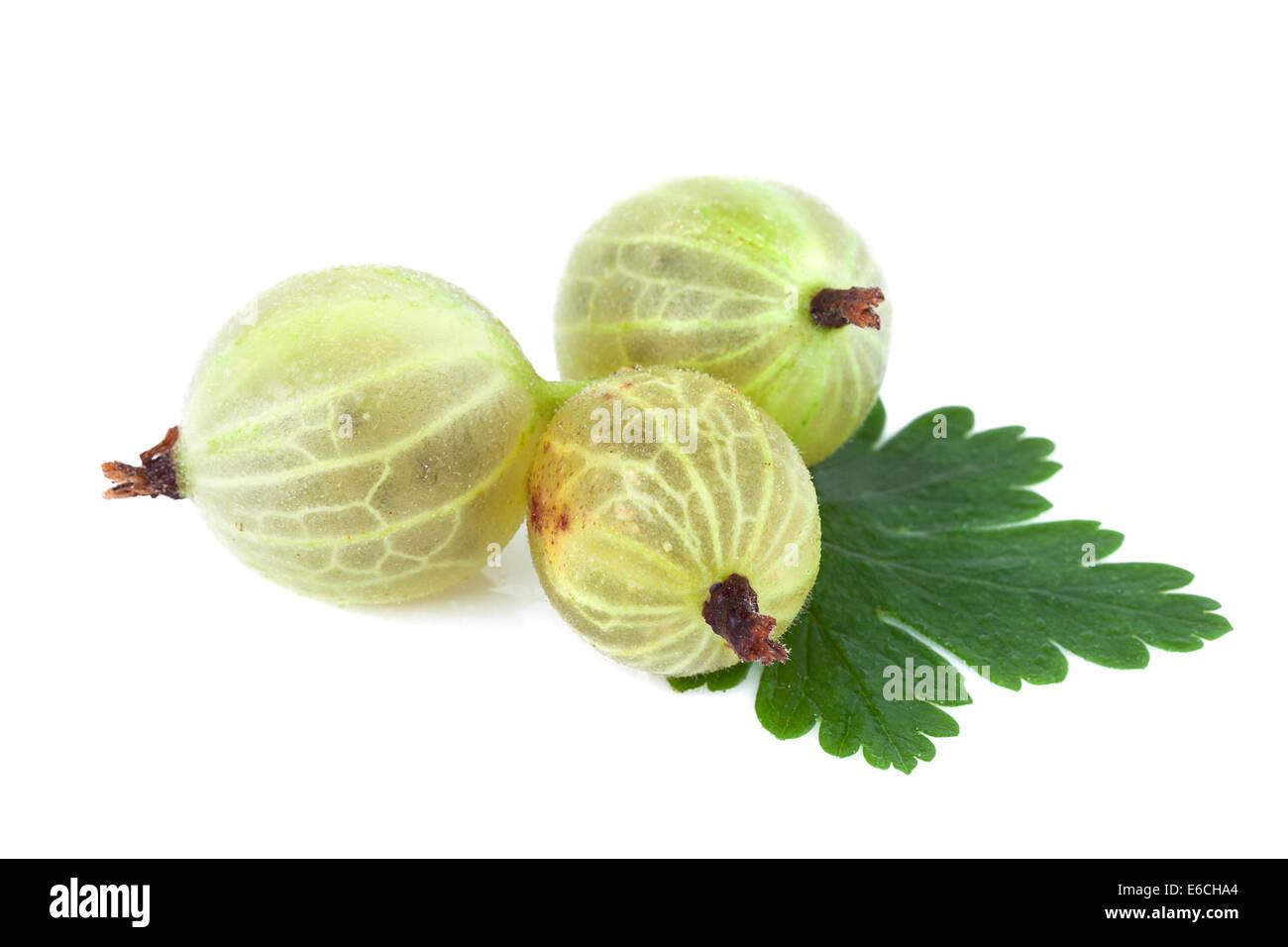 Gooseberry isolated - Stock Image