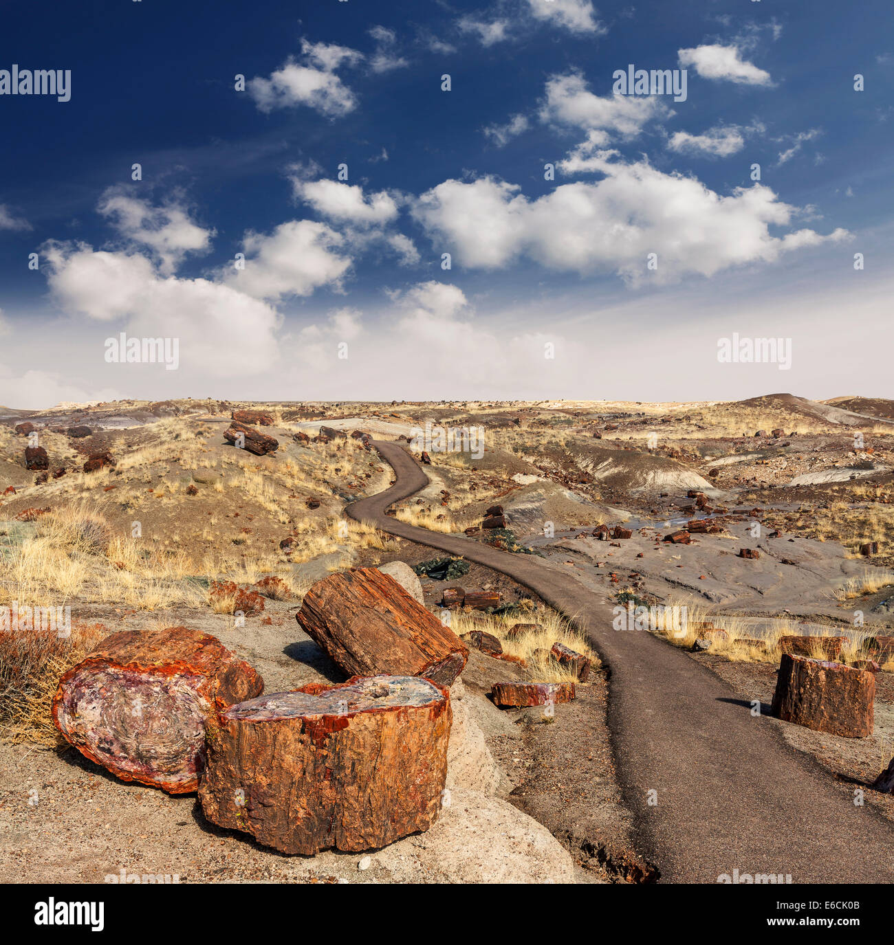 Path in Petrified Forest National Park, Arizona, USA. - Stock Image