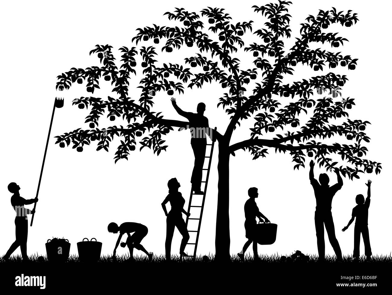Editable vector silhouettes of a family harvesting apples from a tree with people and fruit as separate objects - Stock Vector