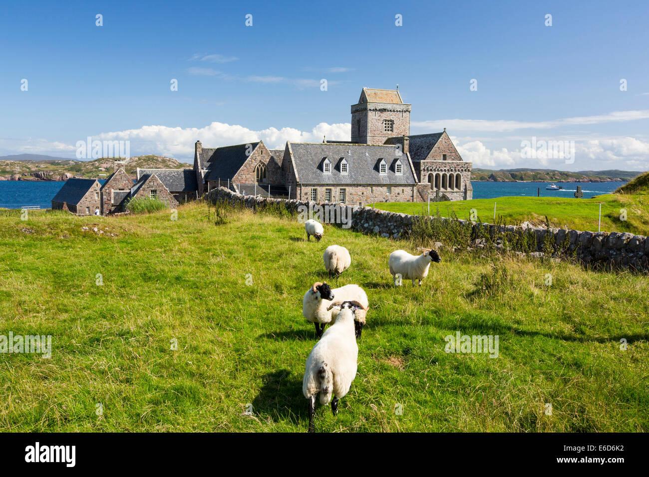 Iona Abbey on Iona, off Mull, Scotland, UK. - Stock Image