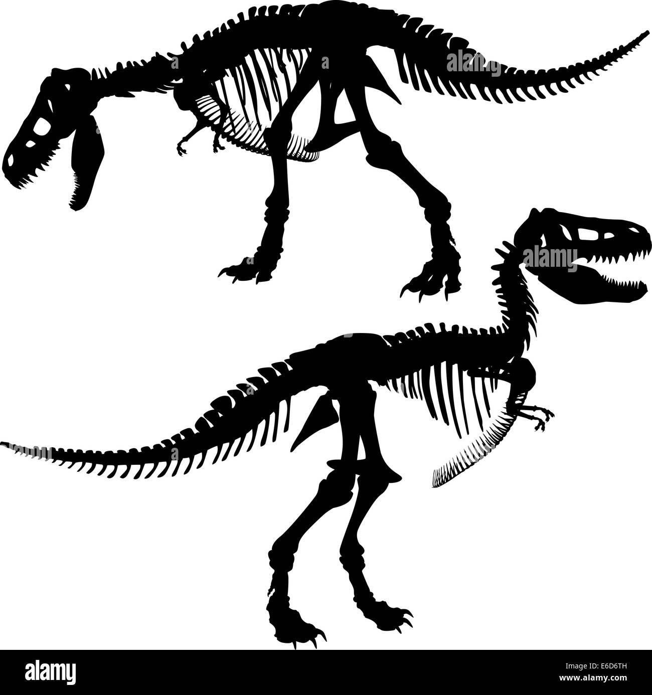 Editable vector silhouettes of the skeleton of a Tyrannosaurus rex dinosaur - Stock Image