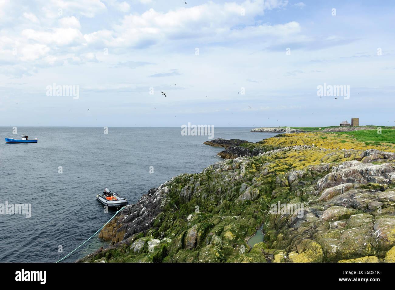 Staple Island Stock Photo