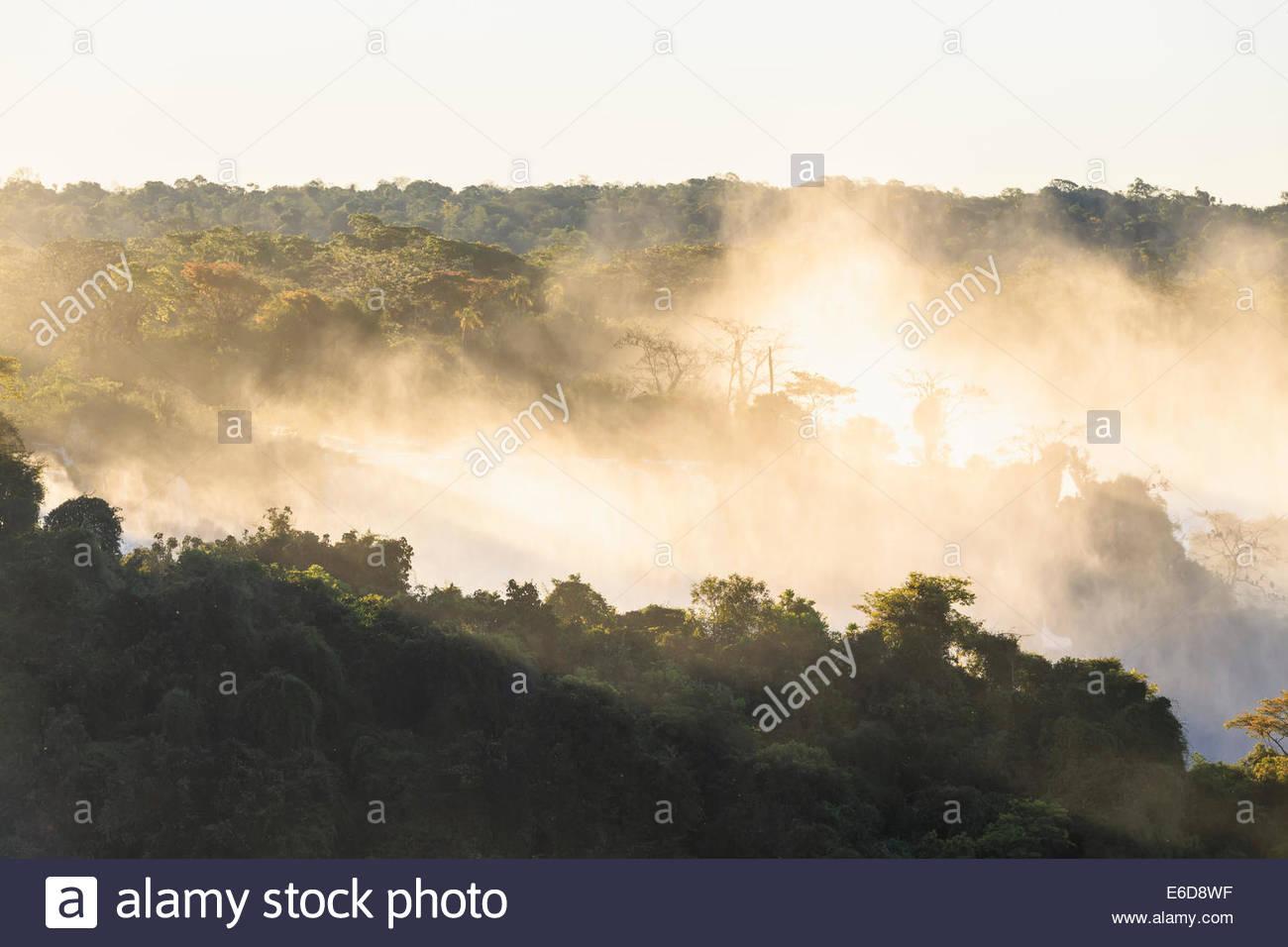 South America, Brazil, Parana, Iguazu National Park, Iguazu Falls, Forest and water vapour - Stock Image