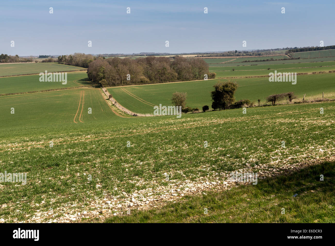 Stony soil in fields, Cotswolds, England, UK - Stock Image