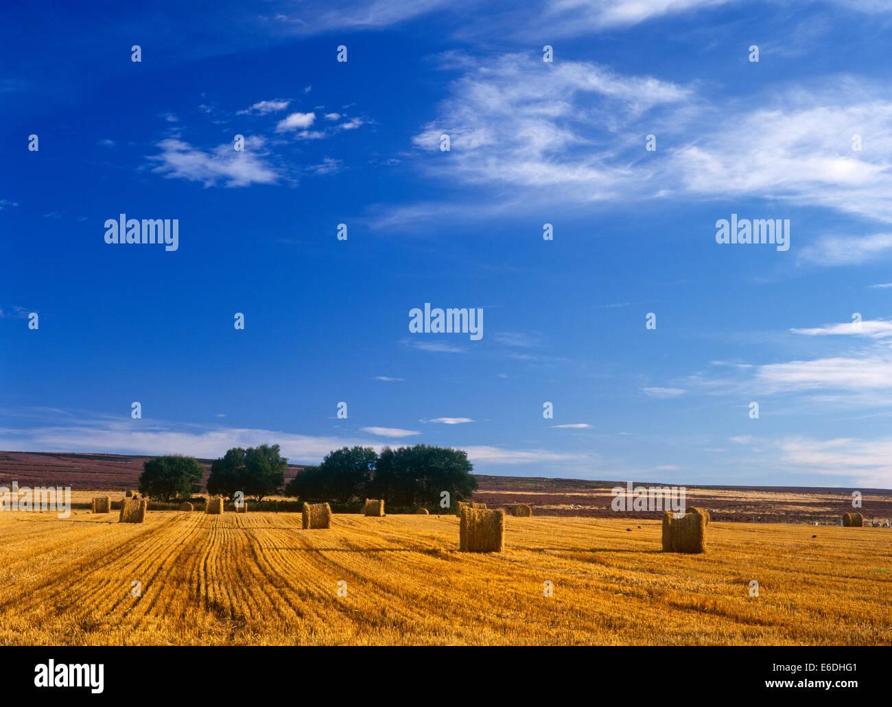 Spaunton Moor North Yorkshire UK - Stock Image