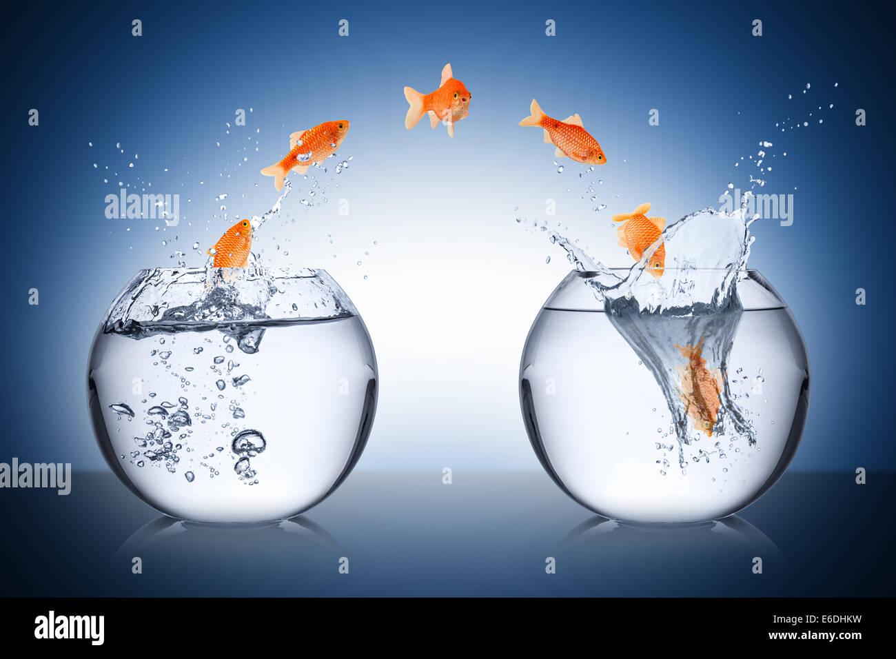 fish change concept - Stock Image