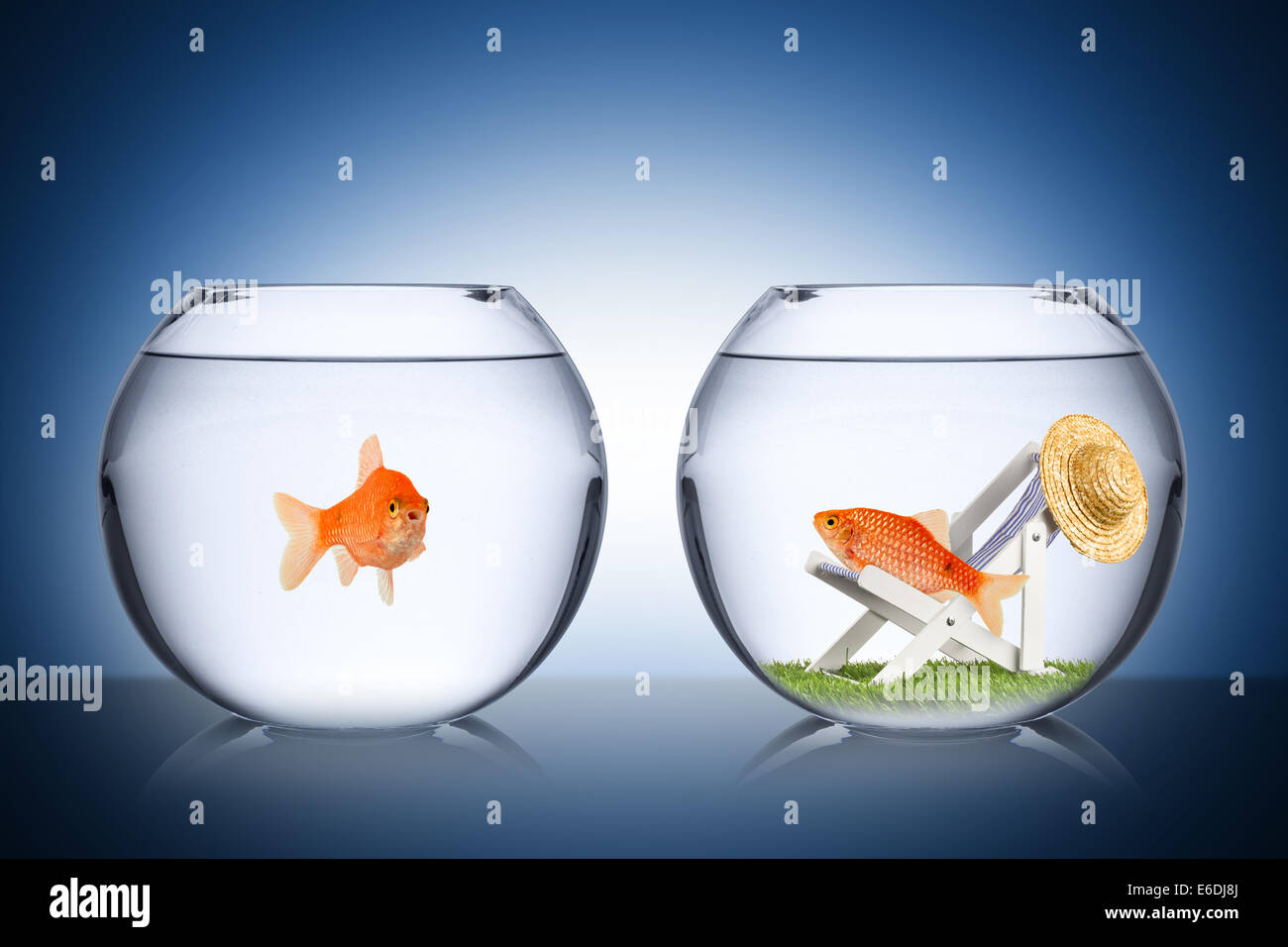 holiday fish concept Stock Photo