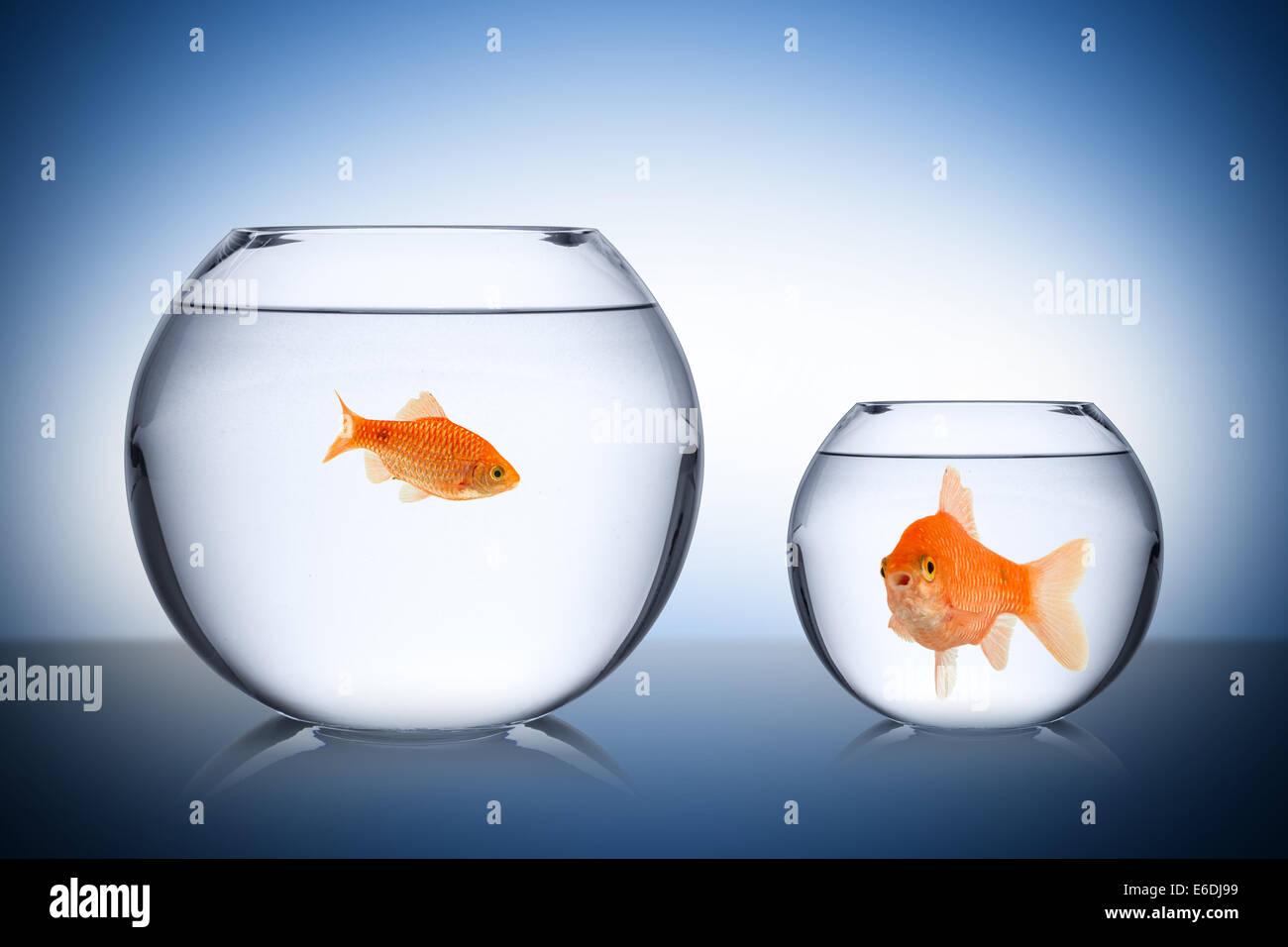 sozial neid konzept mit Fischen - Stock Image
