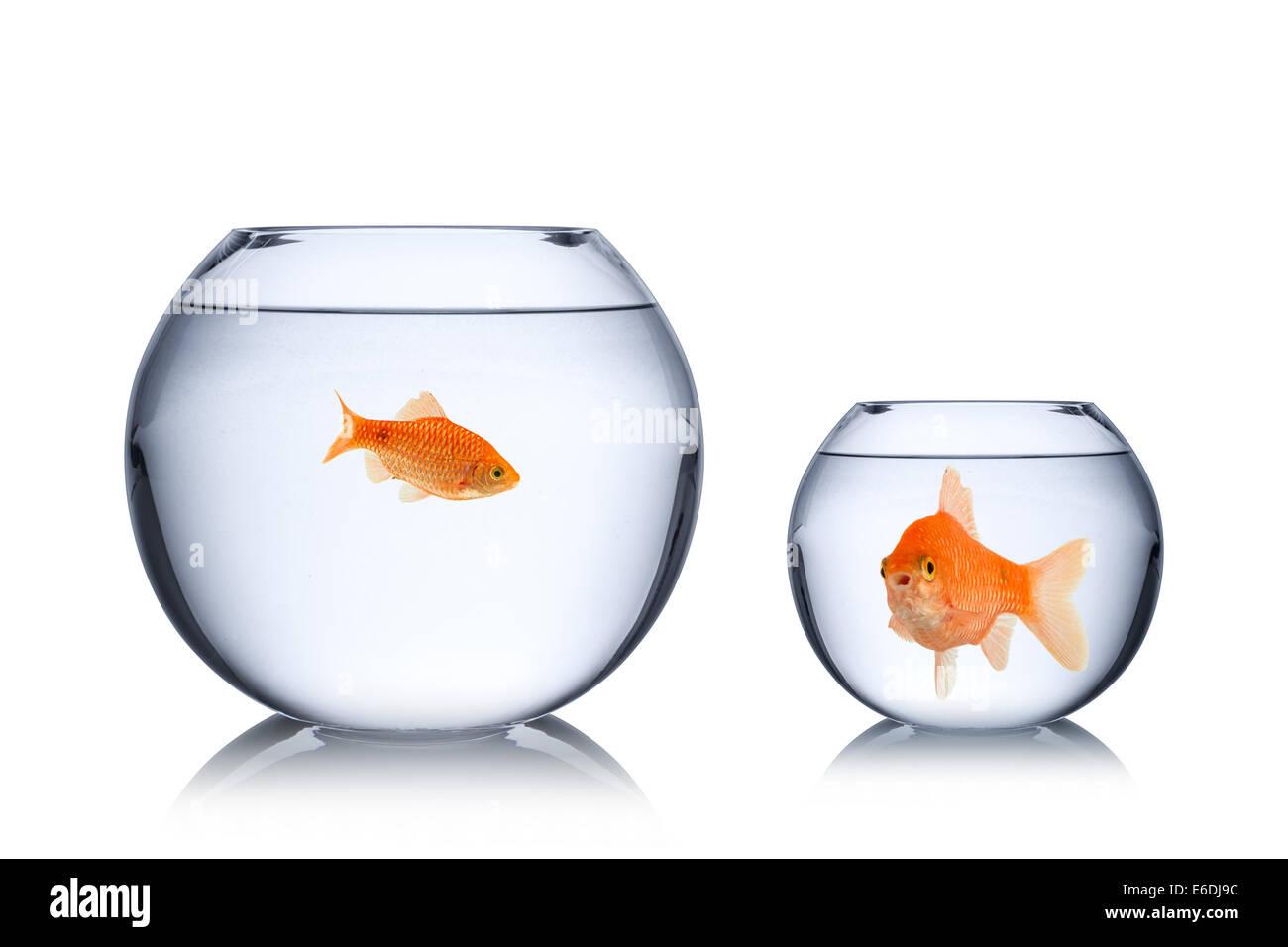 fish social envy concept - Stock Image