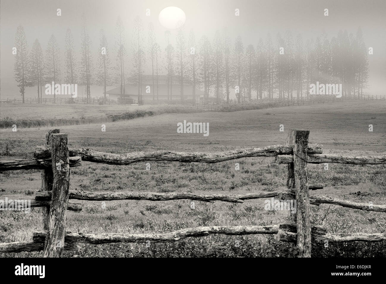 Fence, pasture and Cook Pines in fog with barn, Stables at Ko'ele. Lanai, Hawaii Stock Photo