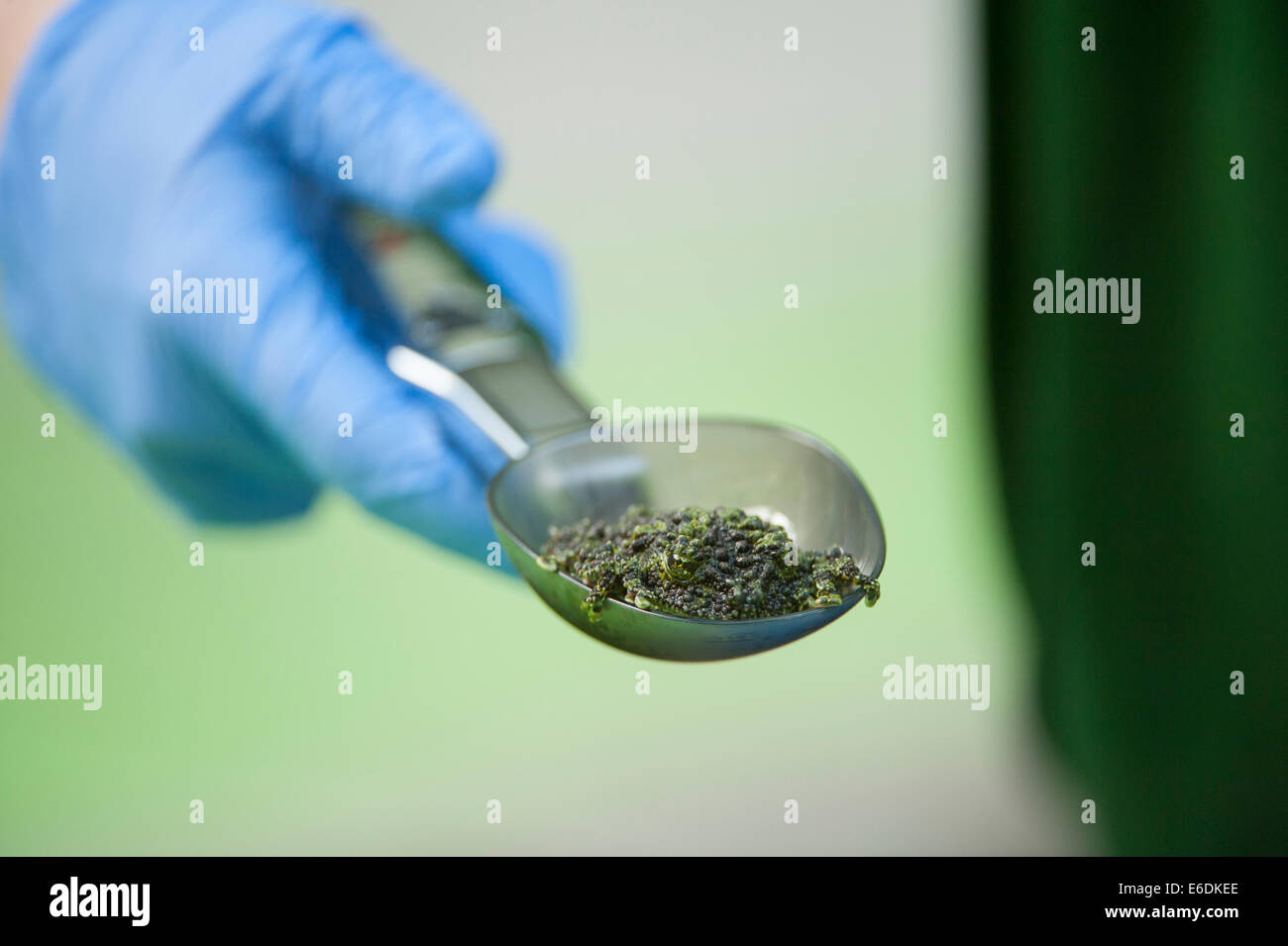 London Zoo, London UK. Thursday 21st August 2014. A Mossy Frog is weighed at London Zoo's annual weigh-in 2014. - Stock Image