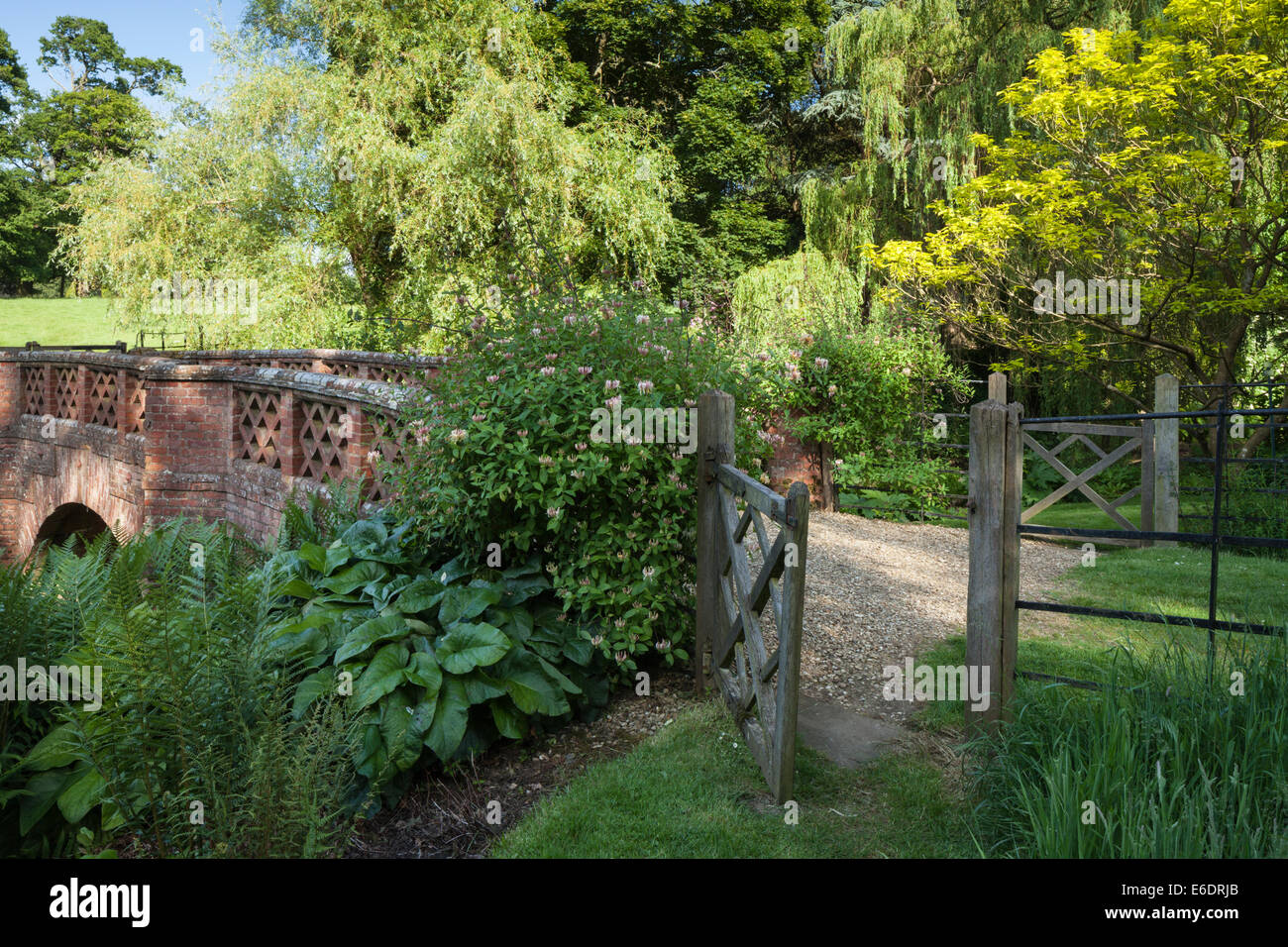 An open gate beside flowering honeysuckle and decorative bridge in the 'Wild Garden' of Cottesbrooke Hall, - Stock Image