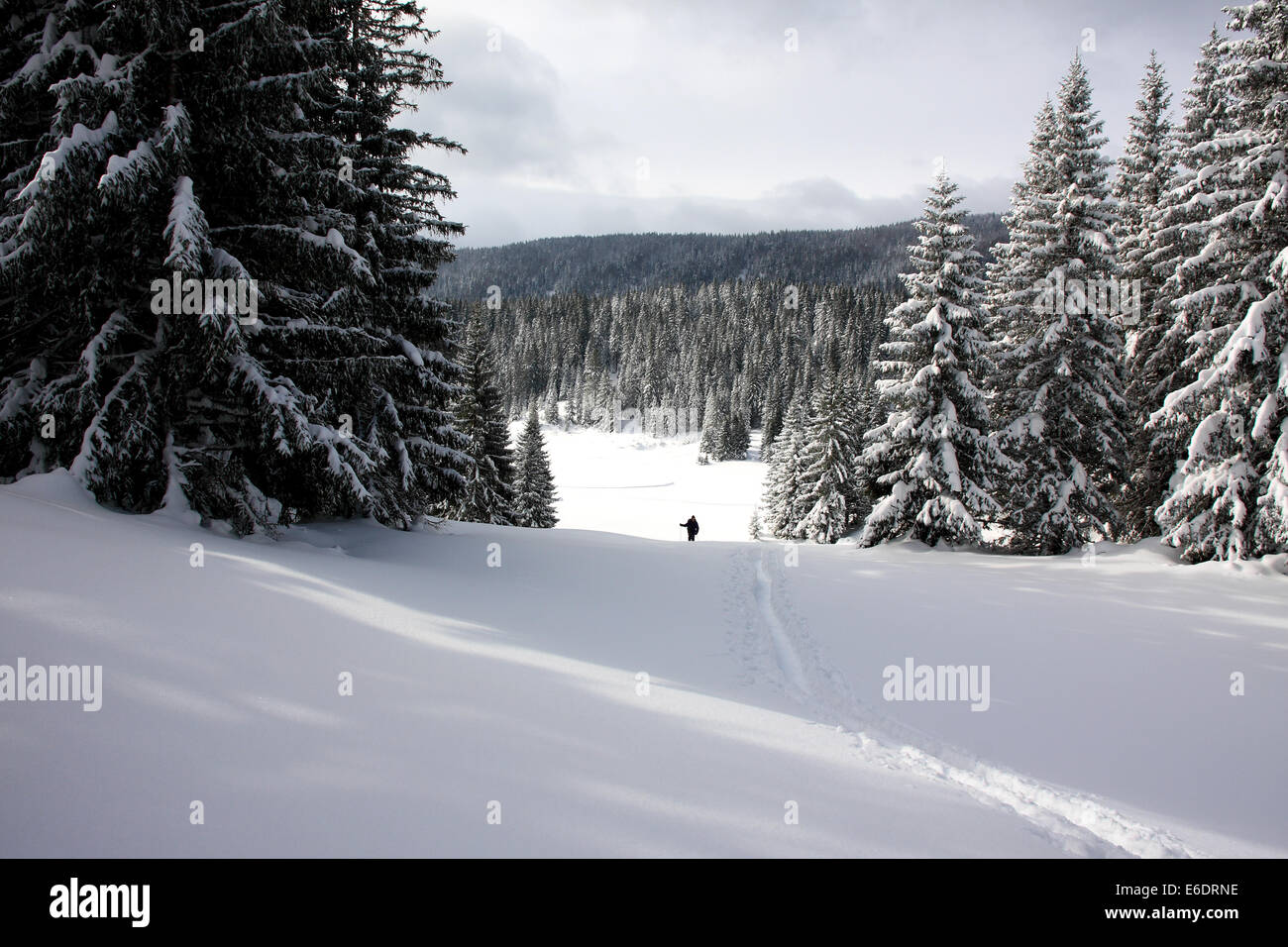 Lone snowshoer following a trail through deep snow in the forests near Sarajevo in Bosnia and Herzegovina - Stock Image