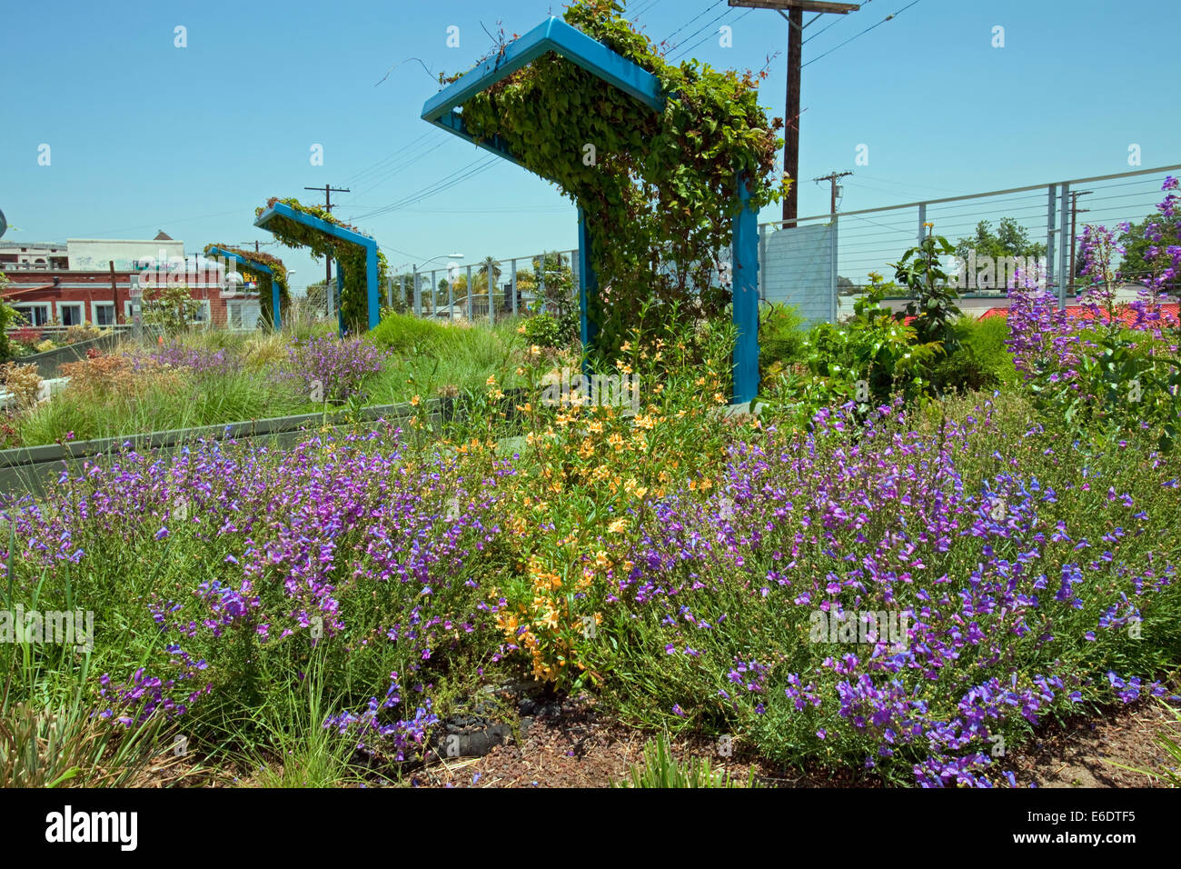 Drought tolerant green roof garden at the LEEDS-certified Council District 9 Neighborhood City Hall, LA, CA, USA. - Stock Image
