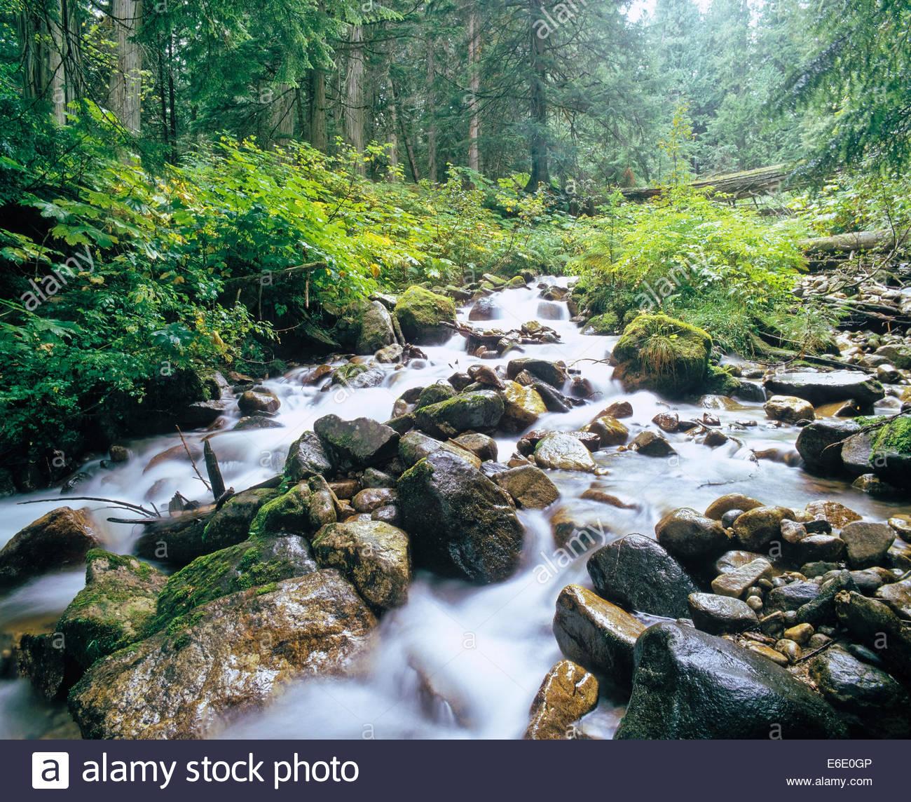Stream through temperate rainforest in Mount Revelstoke National Park in British Columbia Canada - Stock Image