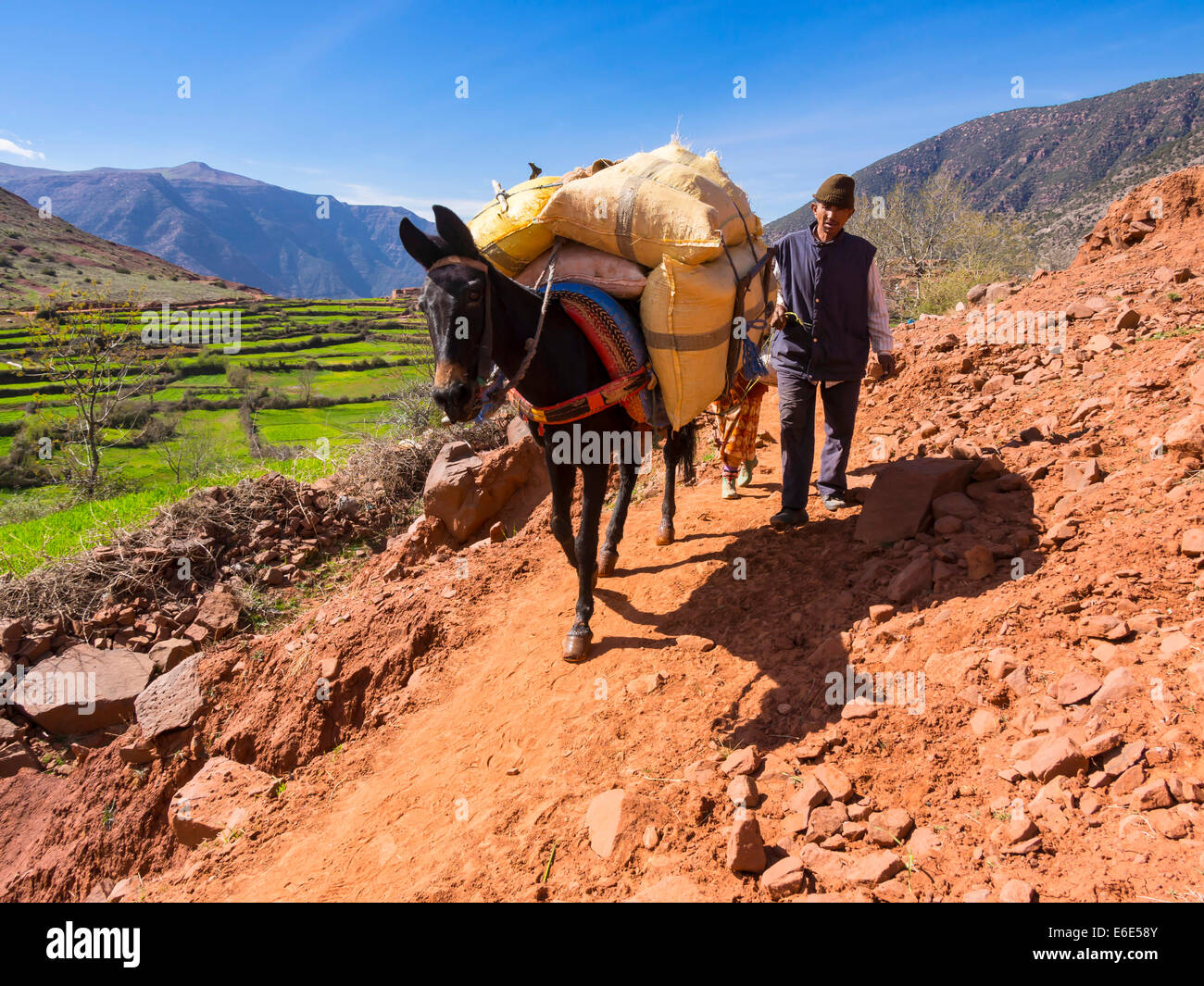 Man with a burro or pack mule carrying a heavy load on a path in the Atlas Mountains, mud-brick village of Anammer Stock Photo