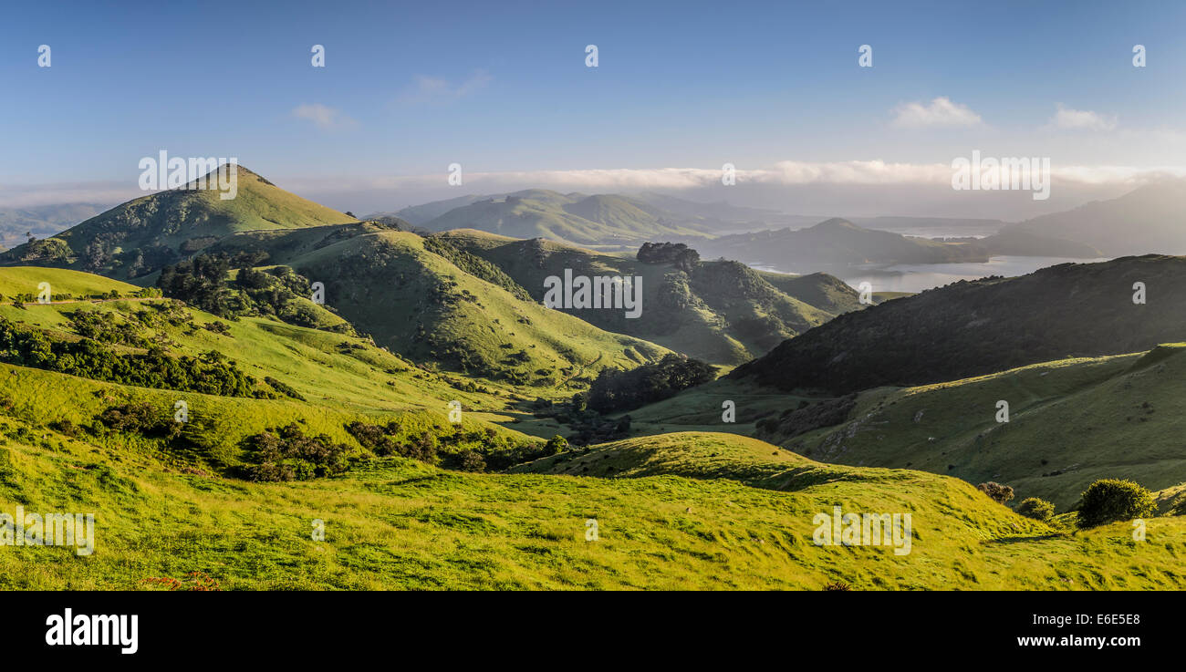 Green hilly grasslands with view of Hoopers Inlet, Otago Peninsula, South Island, New Zealand - Stock Image