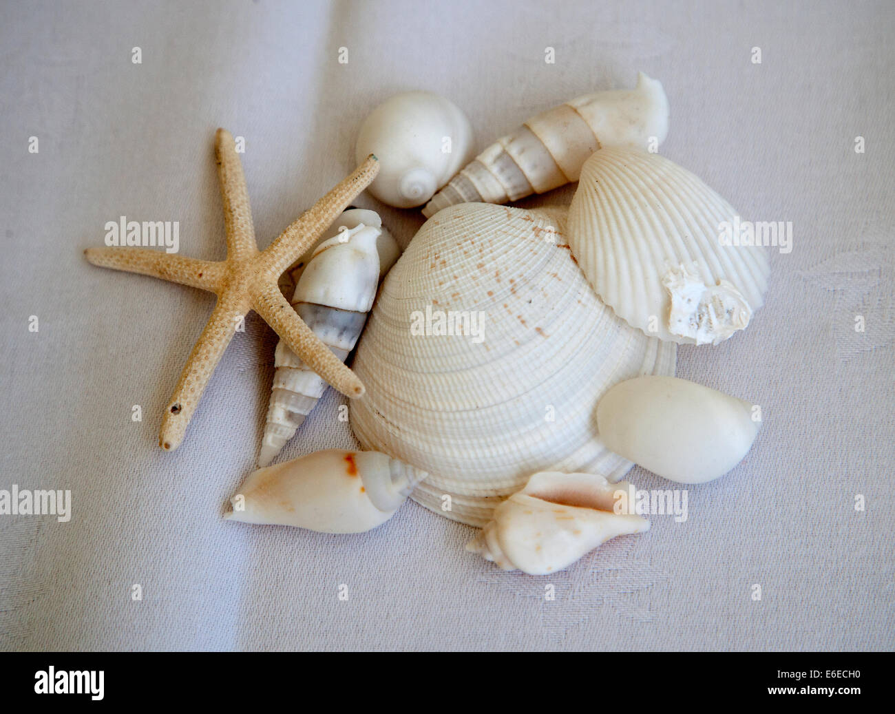 Pile of sea shells on a white table - Stock Image