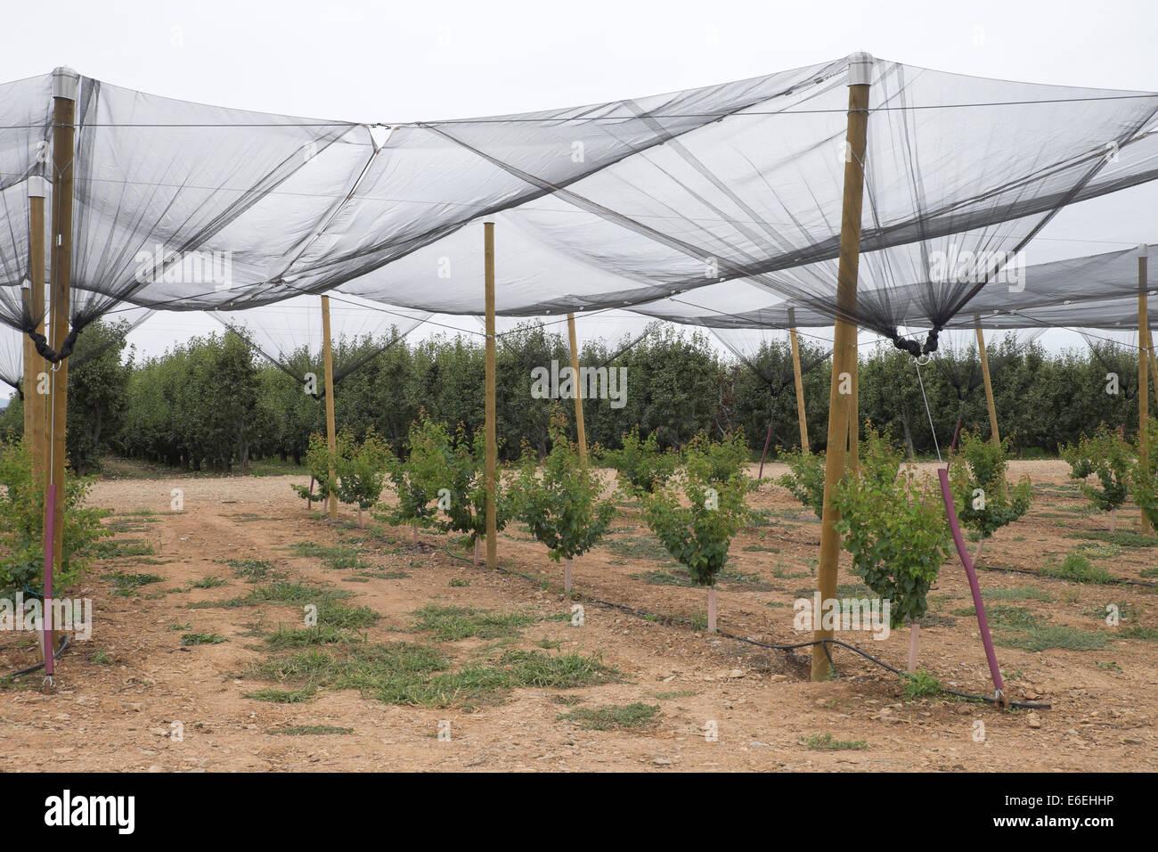Spanish Farms during  Russian boycott food to EU - Stock Image