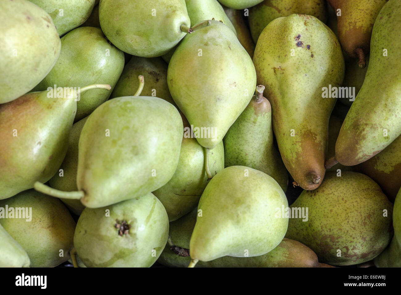 Pears of Spanish farms during Russian boycott food to UE - Stock Image