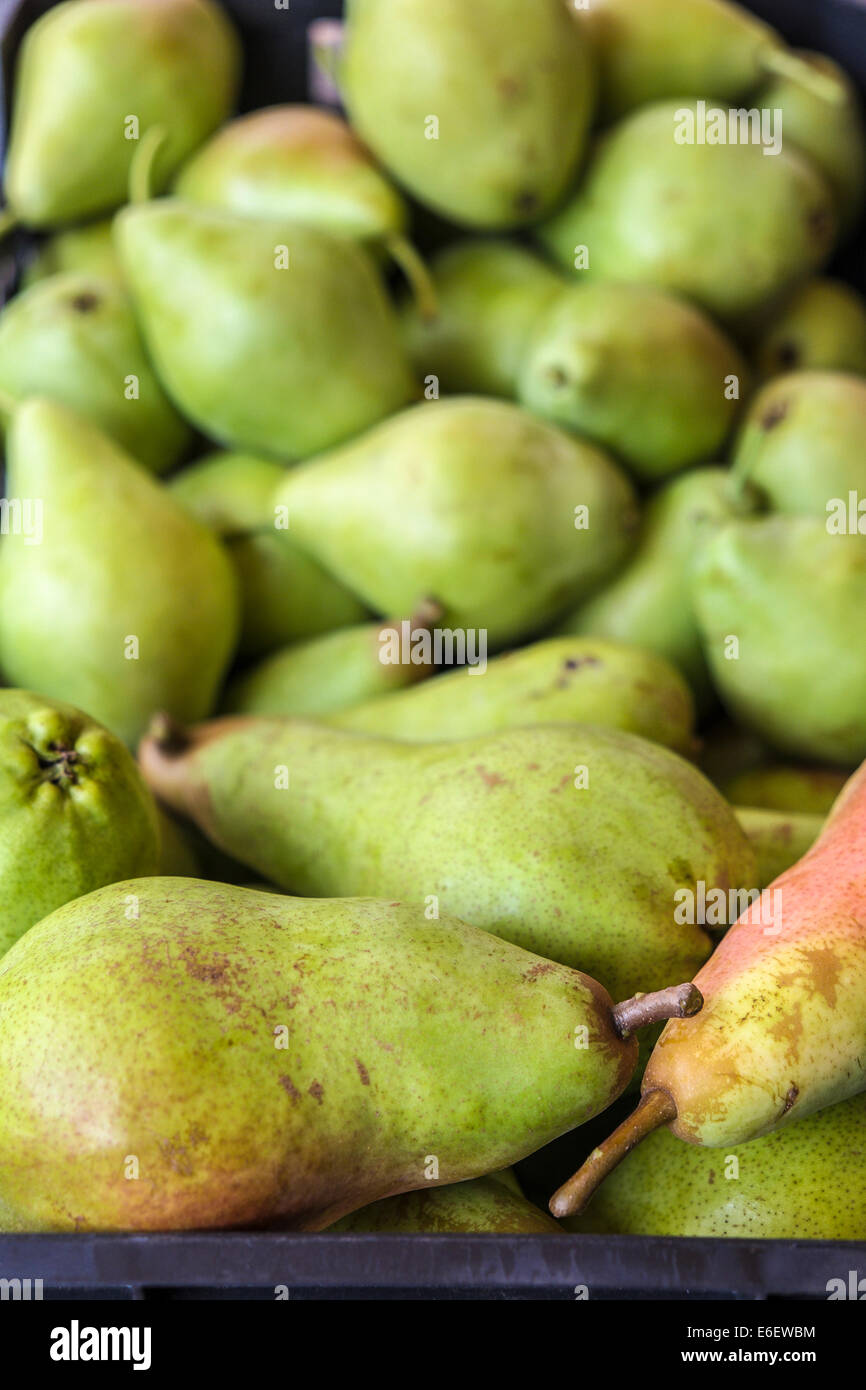 Pears of Spanish farms during Russian boicott food to UE - Stock Image