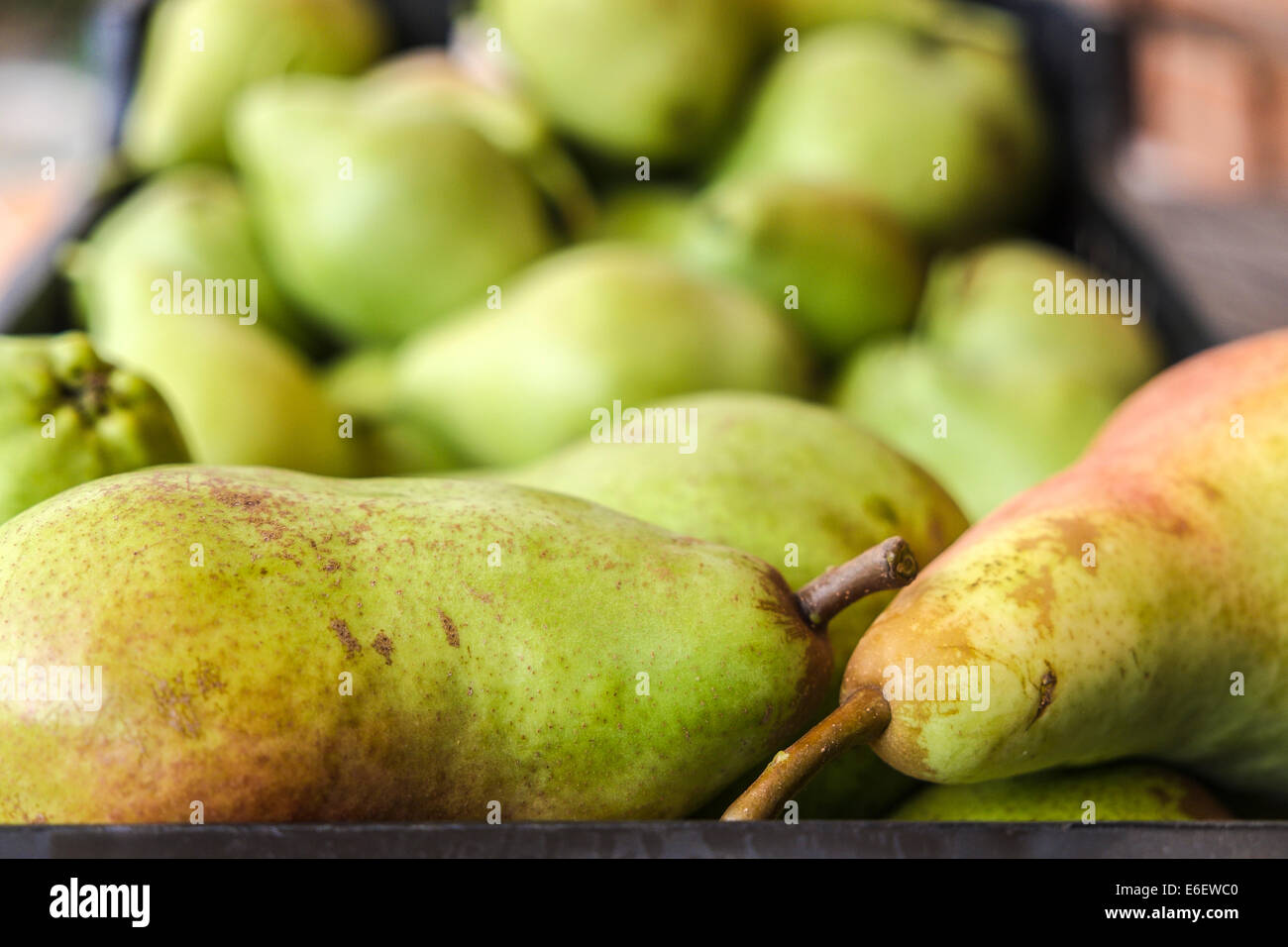 Pears of Spanish farms during Russian boicott food to UE Stock Photo