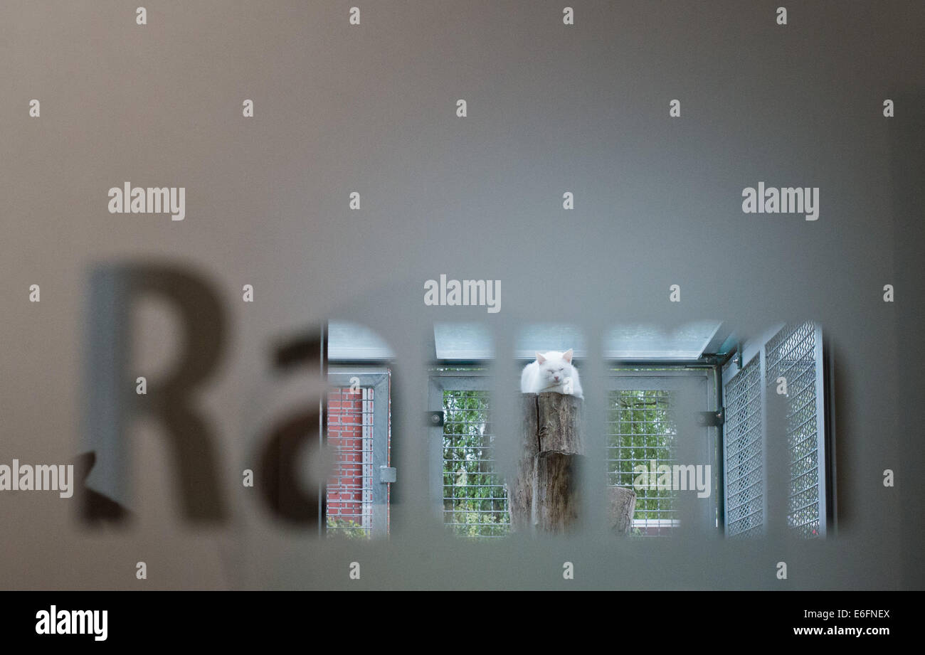 Hanover, Germany. 22nd Aug, 2014. A cat sleeps in the cat house pictured through a glass door with the writing 'Raum' - Stock Image