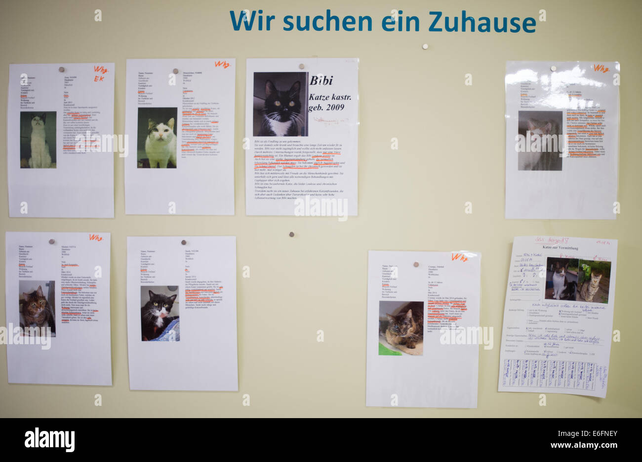 Hanover, Germany. 22nd Aug, 2014. Warrants of apprehension inform about cat which need a new home in the animal - Stock Image