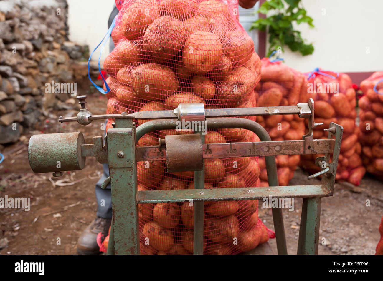 Potatoes from a local farmer are being weighed in leno sacks by a wholesaler's agent in a remote part of Madeira. - Stock Image