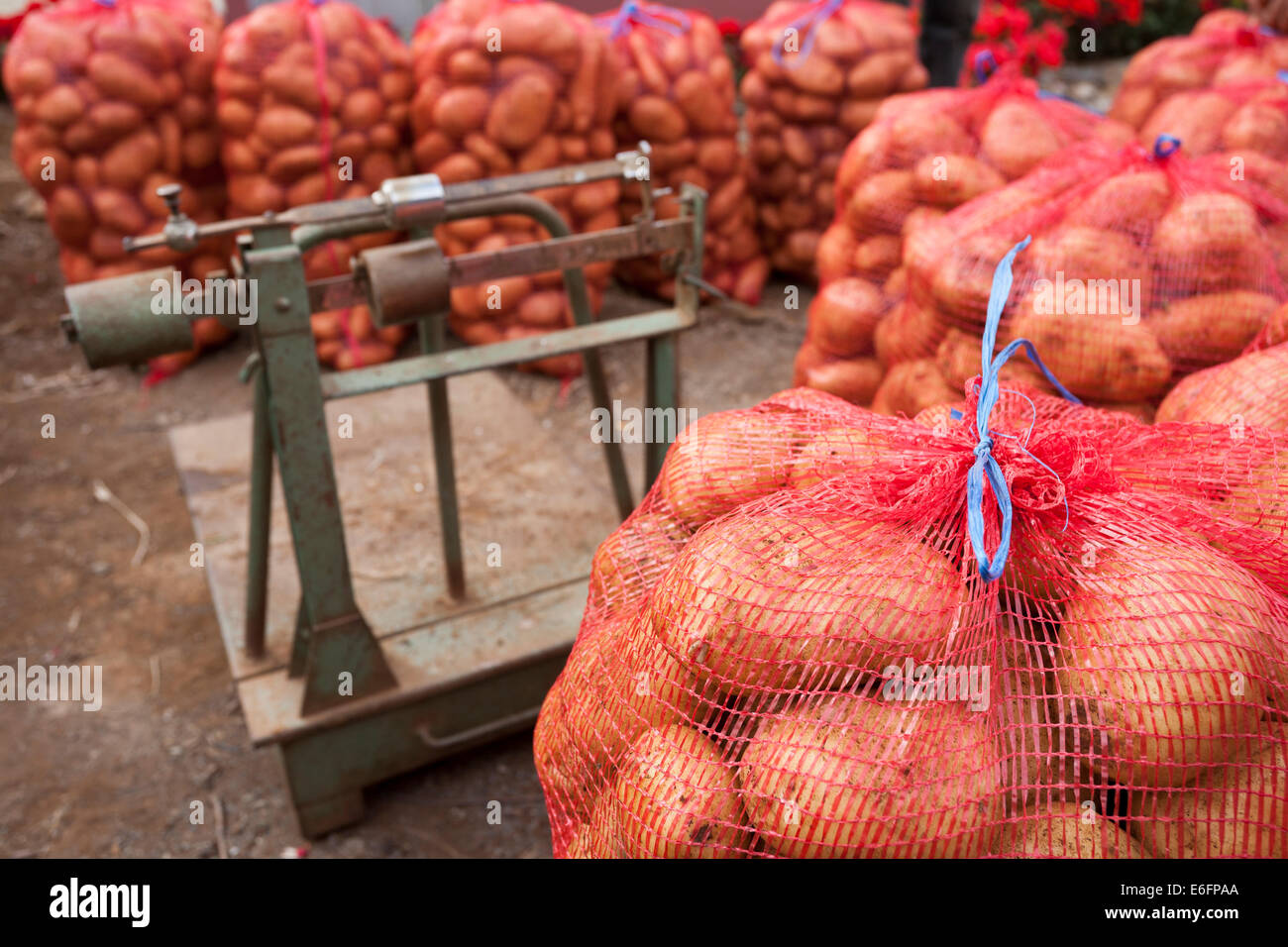 Potatoes in leno weave sacks ready for sale to a wholesaler's agent stand near a weighing scale. - Stock Image