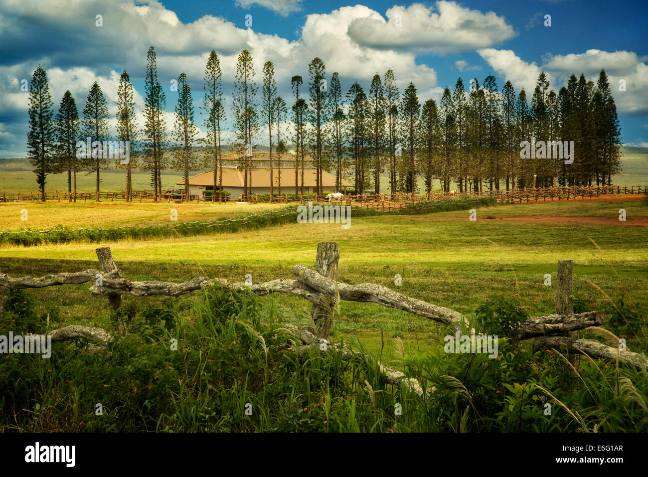 Fence, pasture and Cook Pines with barn, Stables at Ko'ele. Lanai, Hawaii - Stock Image