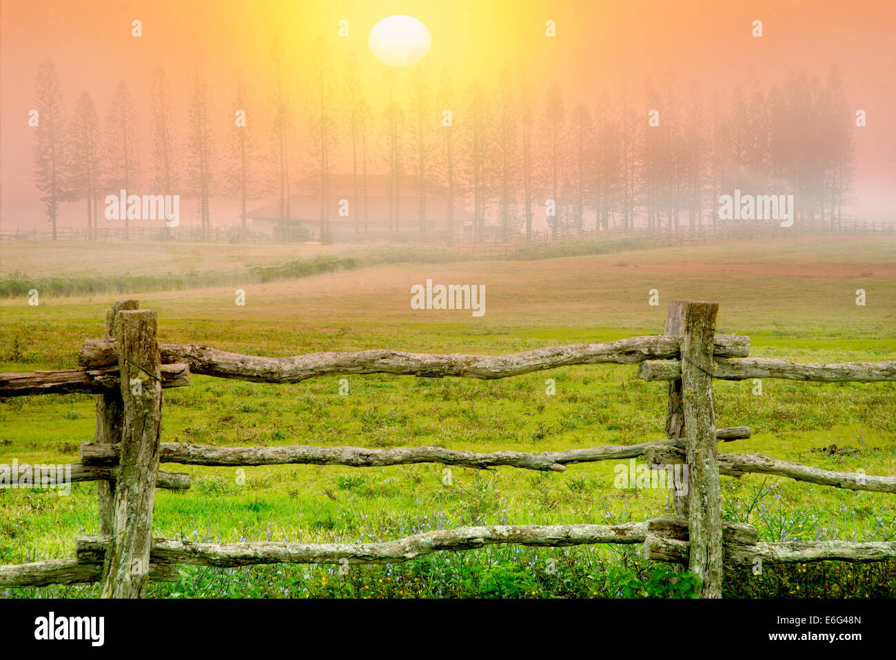 Fence, pasture and Cook Pines in fog with barn, Stables at Ko'ele. Lanai, Hawaii - Stock Image