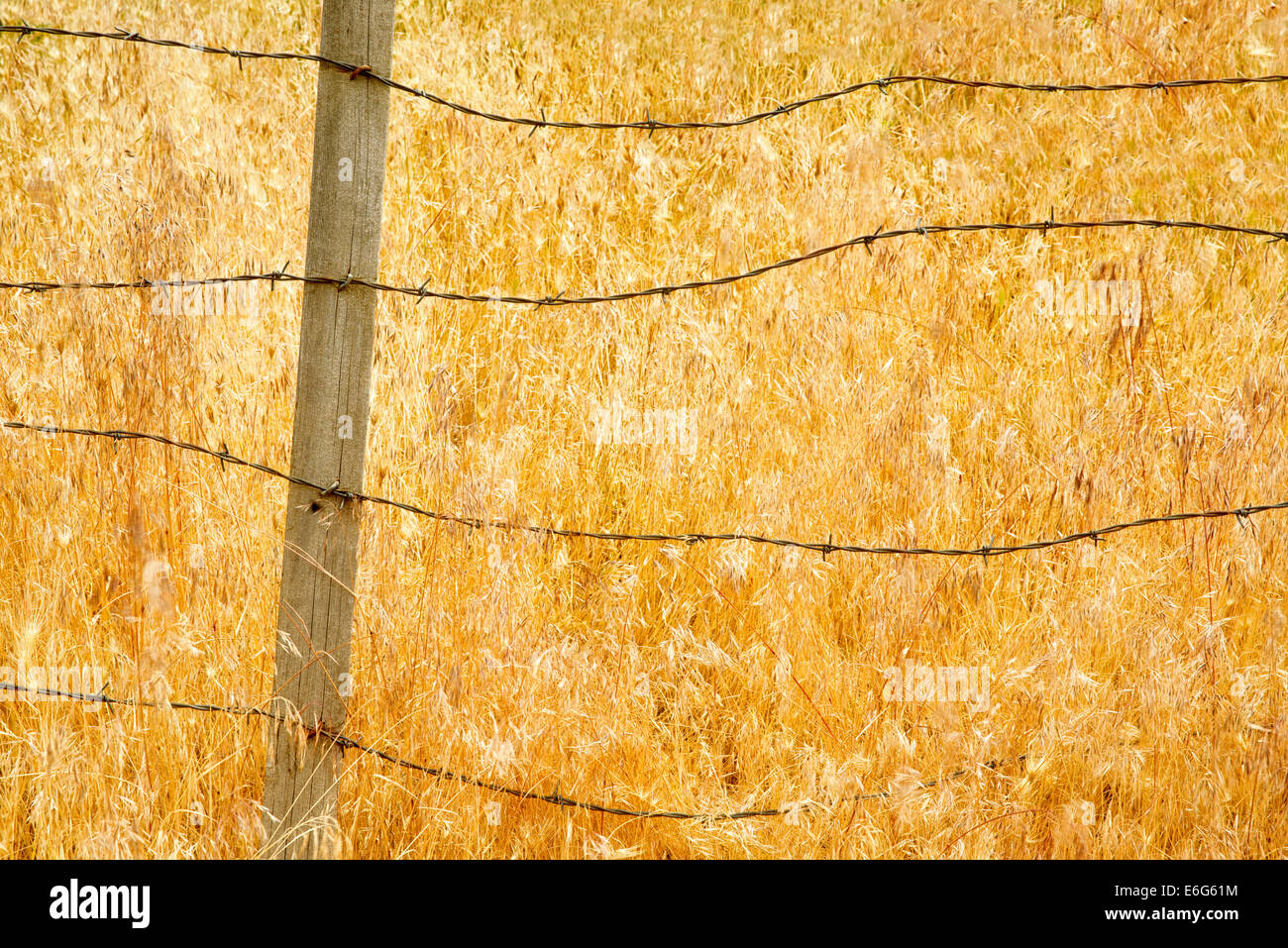 Barbed wire fence and grasses. Oregon.  Hells Canyon National Recreation Area, Oregon - Stock Image