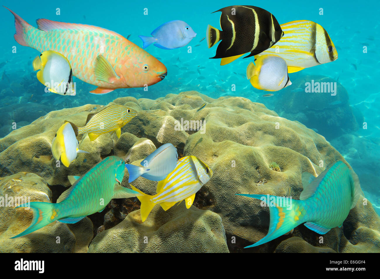 School Colorful Fish In Caribbean Stock Photos & School Colorful ...
