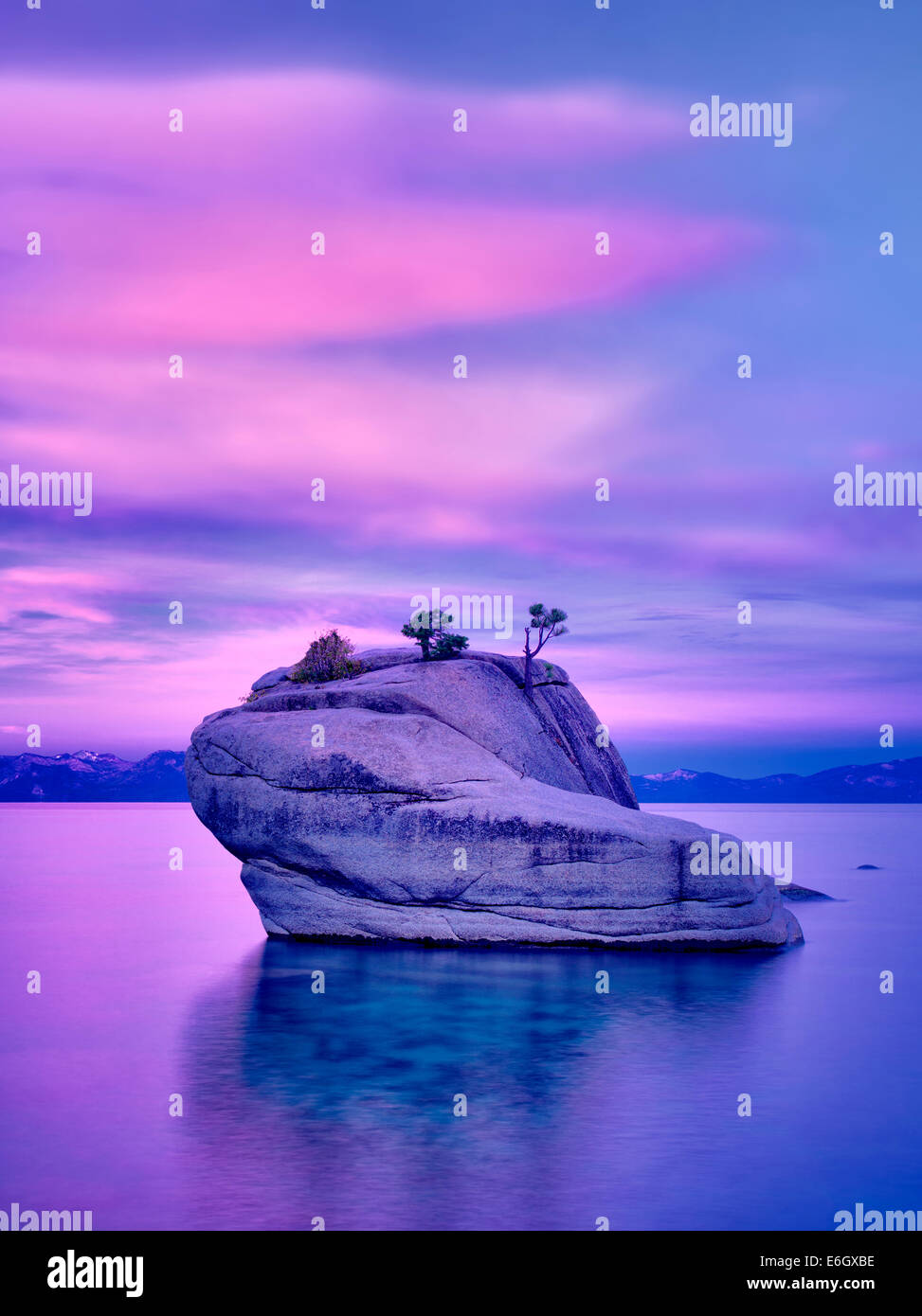 Bonsai tree on boulder with sunrise. Lake Tahoe, Nevada - Stock Image