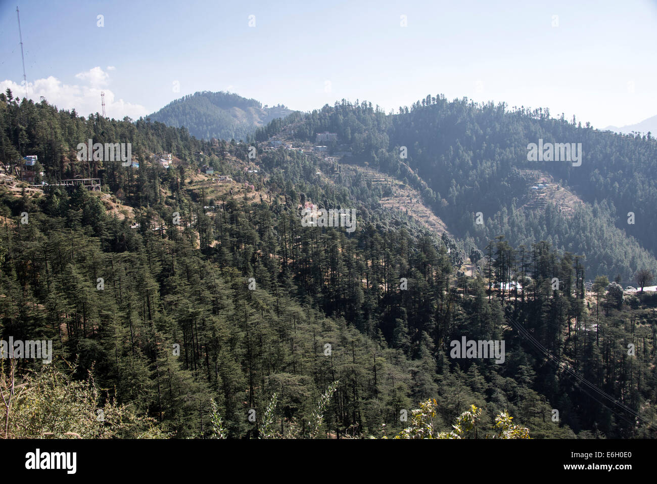 Pine forests in the Himalayan foothills in Himachal Pradesh,India - Stock Image